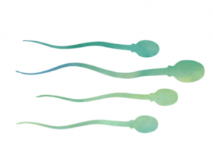 fertilitet graviditet
